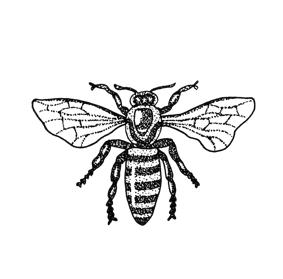 honeybee-transparency