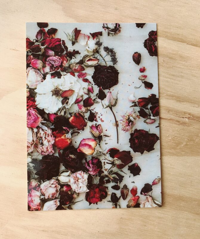 DRIED ROSES POSTCARD BY PLANT & SHARE